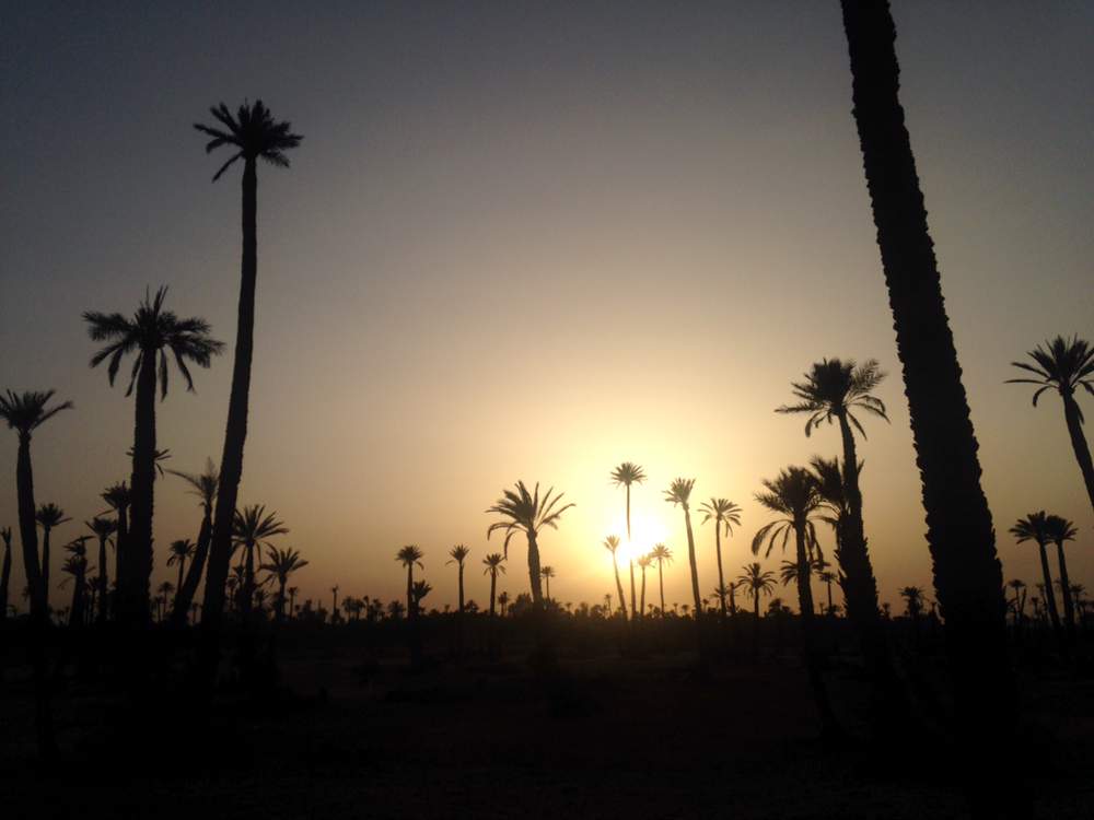 Palm trees at sunset in Marrkesh, Morocco